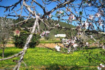 Viajar en los meses de primavera a Ibiza