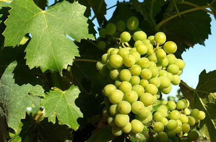 Las mejores bodegas y vinos de la isla de Ibiza